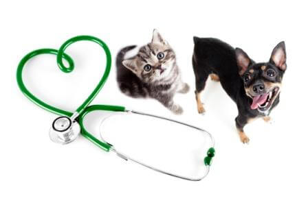 veterinary consultants